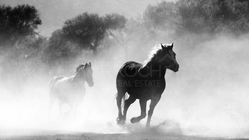Equestrian Centres Marbella